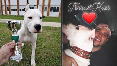 Photo of UBIJEN IZ VATRENOG ORUŽJA U SARAJEVU vlasnički i izložbeni pas – u dvorištu kuće!