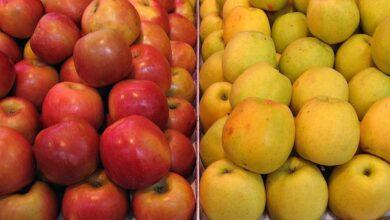 Photo of Povrće i voće koje vaši PSI VOLE I SMEJU DA JEDU