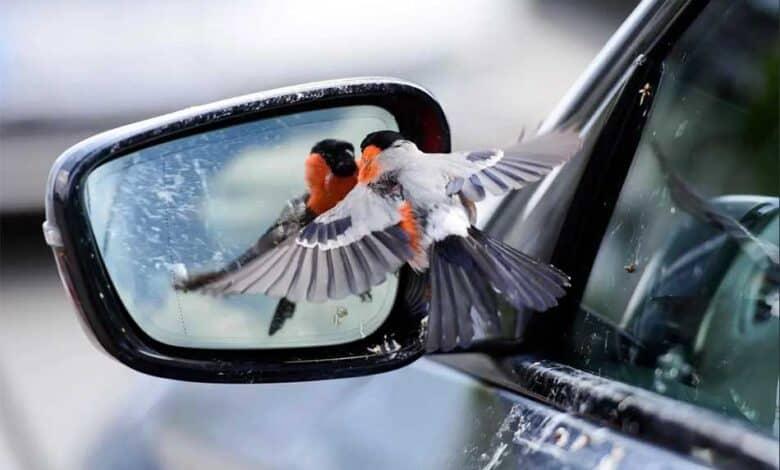Photo of SLIKA DANA: Zimovka se ogleda u retrovizoru automobila