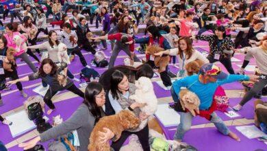 Photo of GINISOVI REKORDERI: Najveći broj pasa na jednom času joge, na svetu