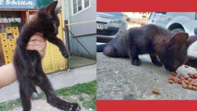 Photo of STRAVA I UŽAS: Pronađeno mače u Rumi sa ODSEČENOM ZADNJOM NOGICOM! (VIDEO)