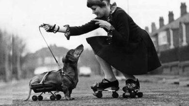 Photo of SLIKA DANA: Na rošulama sa voljenim psom sa invaliditetom, 1973.godine u Mančesteru