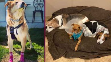 Photo of CENTAR ZA PSE-PENZIONERE U USA: Mesto za starije i bolesne pse, gde mirno i dostojanstveno mogu da prožive poslednje dane…