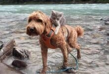 Photo of Od kada je spaseno MAČE upoznalo psa, NE ODVAJA SE OD NJEGA!