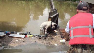 Photo of Dva PSA SU SPASENA nakon što su se 16 SATI BORILA ZA GOLI ŽIVOT u poplavljenoj Južnoj Luizijani