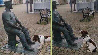 Photo of Pas ne može da razume ZAŠTO čovek-statua NEĆE DA MU BACI LOPTU! (VIDEO)