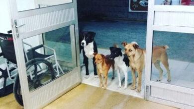 Photo of Kada se NJIHOV PRIJATELJ – BESKUĆNIK razboleo, 4 psa sa ulice su SATIMA ČEKALI ispred bolnice