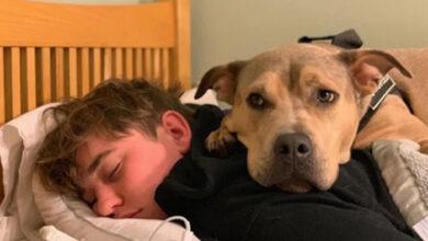 Photo of Ovaj spaseni pas se PLAŠIO SVEGA, dok nije upoznao brata