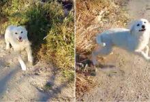 Photo of Psa je OBUZELA NEOPISIVA SREĆA kada je video ČOVEKA koji mu prilazi da ga SPASI (VIDEO)