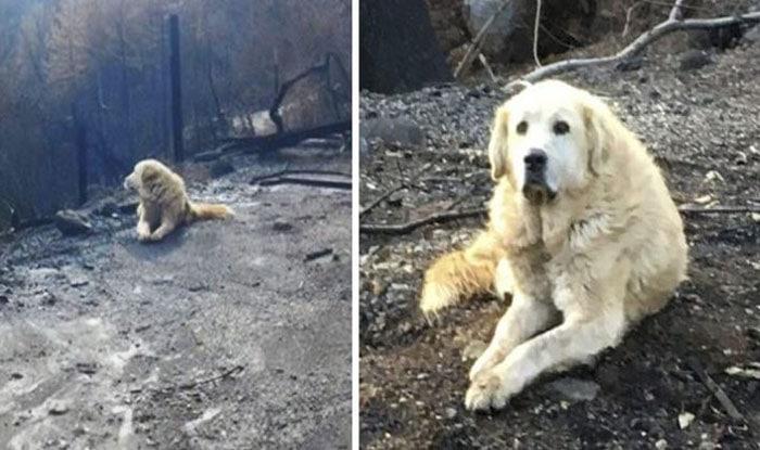 Photo of Pas koji je PREŽIVEO POŽAR u Kaliforniji ČUVAO JE SVOJ IZGORELI DOM SKORO MESEC DANA dok se porodica nije vratila (VIDEO)