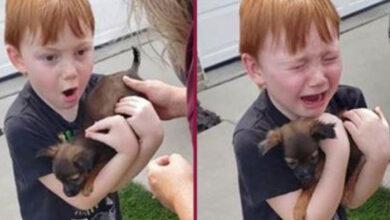 Photo of KOLIKO EMOCIJA U TRENUTKU: Dečak je ZAPLAKAO od uzbuđenja kada je DOBIO ŠTENE! (VIDEO)