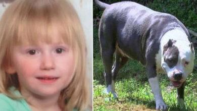 Photo of Devojčicu koja je NESTALA NA DVA DANA, sve vreme je ČUVAO NJEN PAS (VIDEO)