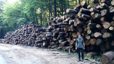 """Photo of IZ NACIONALNOG PARKA """"FRUŠKA GORA"""": Kako li su šume gde nema formalne zaštite države, ako su zaštićene ovakve?"""
