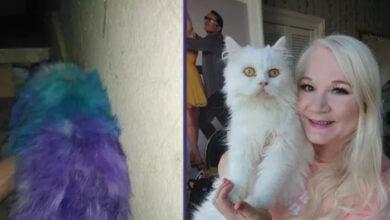 Photo of Mačak koga su monstrumu PRETUKLI I SLIKALI u Egiptu, preleteo je skoro 6.500KM DO NOVOG DOMA u Škotskoj