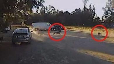 Photo of Malenog psa je NAPAO KOJOT, a spasio ga je NEOČEKIVANI HEROJ! (VIDEO)
