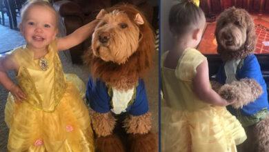 Photo of NIŠTA SLAĐE NISTE SKORO VIDELI: Devojčica i njen pas PLEŠU ZAJEDNO (VIDEO)
