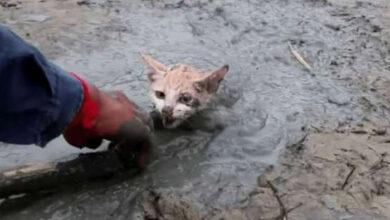 Photo of BEZ NJEGA NIJE IMALO ŠANSE: Čovek je spasio MAČE zaglavljeno u blatu (VIDEO)