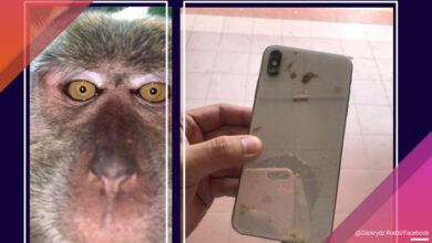 Photo of Malezijac je PRONAŠAO SELFIJE MAJMUNA na svom izgubljenom telefonu