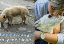 Photo of Pas sa ulice je živeo NA PARKINGU, a onda je otputovao 8.000KM do svog stalnog doma (VIDEO)