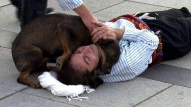 Photo of Pas sa ulice PREKINUO PREDSTAVU da bi POMOGAO GLUMCU koji je glumio da je povređen (VIDEO)