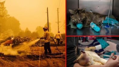Photo of TUŽNE I UZNEMIRUJUĆE FOTOGRAFIJE: Životinje pretrpele velike opekotine; vatra i dalje hara Kalifornijom!