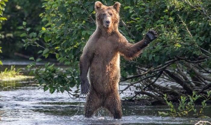 Photo of SLIKA DANA: Pozdrav mrkog medveda iz reke na Aljasci
