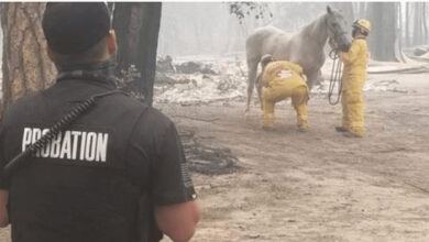 Photo of Vlasnici saznali na internetu da je njihov KONJ USPEO DA PREŽIVI RAZORNI POŽAR u Kaliforniji