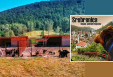 "Photo of BORBA UDRUŽENJA ""Silver Dog Srebrenica"" da, uređenjem SKLONIŠTA, pomognu SPASAVANJU 90 PASA"
