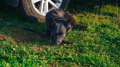 Photo of UŽAS U BANJALUCI: Psa vezao za auto i VUKAO GA ULICOM!