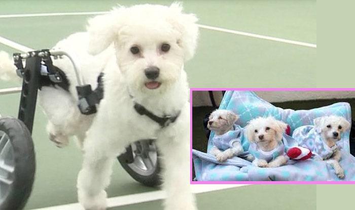Photo of Priča o 3 šteneta ROĐENIH SA OZBILJNIM DEFORMITETIMA, koji su PRONAŠLI LJUDE KOJI IH VOLE baš onakve kakvi jesu! (VIDEO)