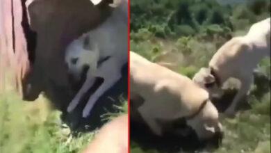 Photo of U FOČI ZLOSTAVLJAN I UBIJEN PAS: Internetom kruži izuzetno uznemirujući VIDEO!