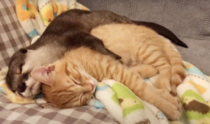 Photo of OVA VIDRA BAŠ VOLI DA SE MAZI: Ona grli svog najboljeg prijatelja svake večeri pre spavanja (VIDEO)