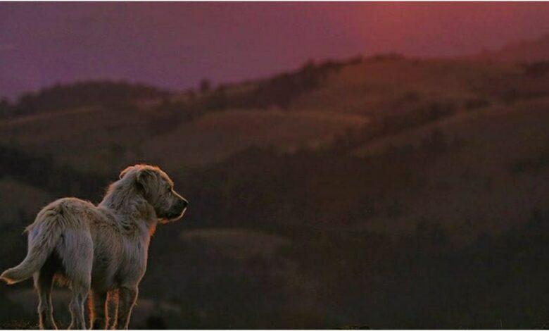 Photo of SLIKA DANA: Pas na najvišem vrhu planine Maljen – Kraljevom stolu