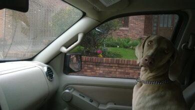 Photo of Kako da psu obezbedite SIGURNU VOŽNJU KOLIMA
