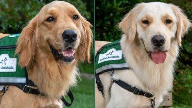 Photo of PRVA NEDELJA NA POSLU: Duo terapijskih pasa je POČEO SA RADOM u dečjoj bolnici u Čarlstonu