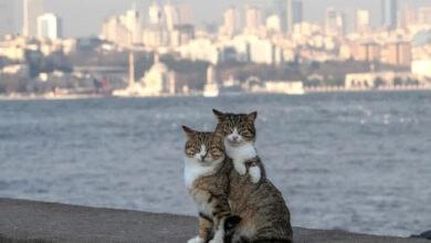 Photo of Istanbulske vlasti APLIKACIJOM LOCIRAJU životinje sa ulice, kako bi se BOLJE BRINULI O NJIMA