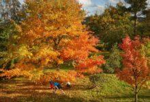 Photo of SLIKA DANA: Jesen u Kentu, okrugu u jugoistočnoj Engleskoj