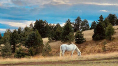 Photo of SLIKA DANA: Konj mirno pase na obroncima Zlatibora