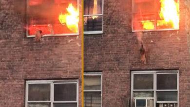 Photo of Mačka je SKOČILA SA DRUGOG SPRATA zgrade, dok je BUKTAO POŽAR (VIDEO)