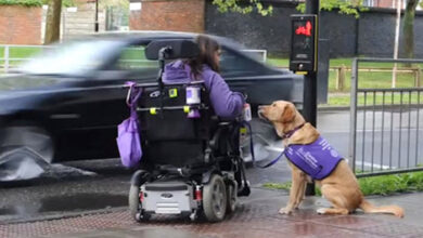 Photo of Izuzetan pas potpuno PROMENIO ŽIVOT ŽENI sa invaliditetom (VIDEO)