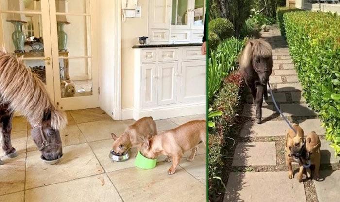 Photo of U ovoj porodici, PSI IZVODE KONJE u šetnju (VIDEO)