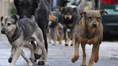 Photo of Najavljena IZGRADNJA AZILA za napuštene životinje u Staroj Pazovi (VIDEO)