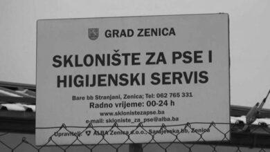 Photo of BiH: LEŠEVI PASA U GOMILAMA! Ko je naredio ubijanje?