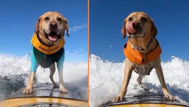 Photo of Upoznajte psa Čarlija, ŠAMPIONA U SURFOVANJU