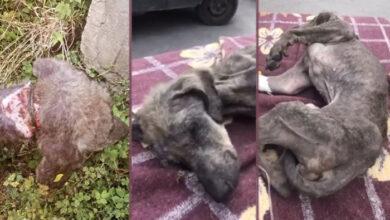 Photo of U Bosni pronađen PAS DANIMA VEZAN ZA DRVO, BEZ HRANE I VODE (VIDEO)