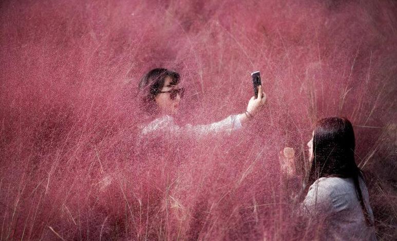 Photo of SLIKA DANA: Selfi u ružičastoj travi u parku Hanam u Južnoj Koreji