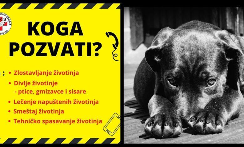 Photo of KOGA POZVATI u slučaju zlostavljanja životinja, potrebe za lečenjem, spasavanjem i smeštajem?