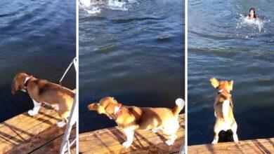 Photo of Bigl je USKOČIO U VODU kako bi SPASIO DEVOJČICU da se ne utopi (VIDEO)