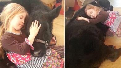 Photo of Petogodišnja devojčica je KRIŠOM UVELA TELE U KUĆU, kako bi se mazili (VIDEO)