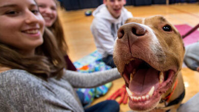 Photo of SAMO 10 MIN provedenih sa psom ili mačkom – ZNAČAJNO SMANJUJE STRES